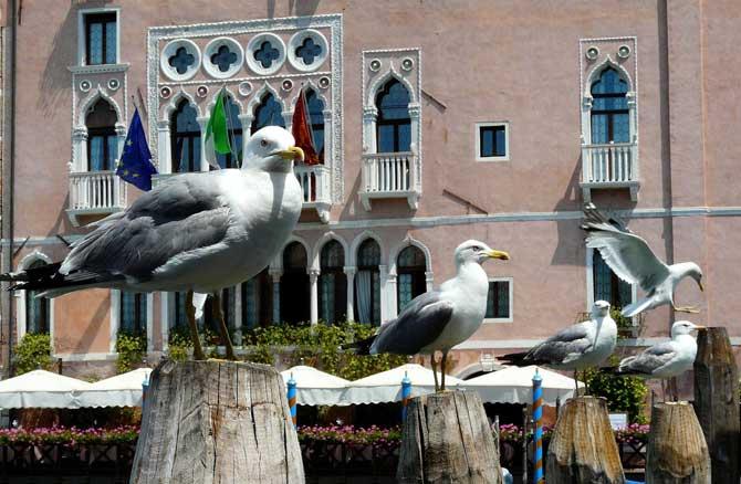 Венеция тонкости туризма