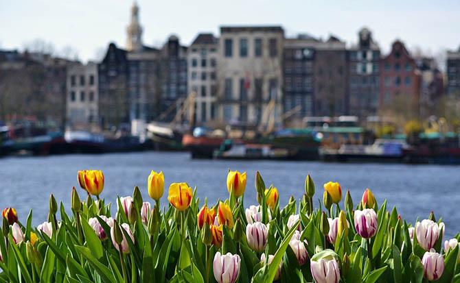 Амстердам самостоятельно советы туристам