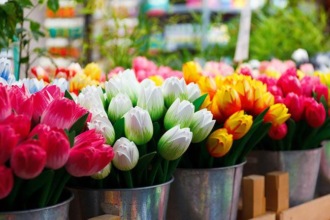 самостоятельно в Амстердам тюльпаны советы
