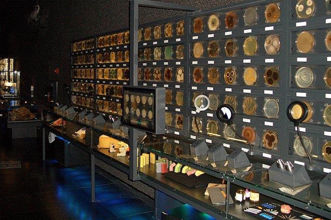 необычные музеи в Амстердаме
