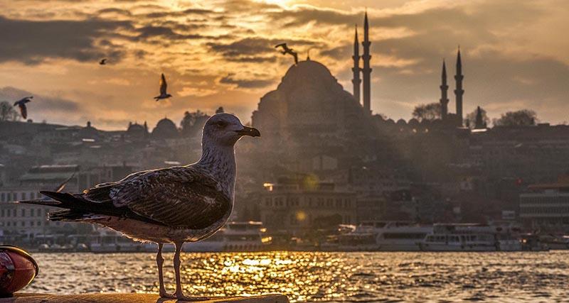 Стамбул путеводитель и аудиогид