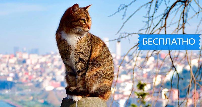 Стамбул аудиогид бесплатно