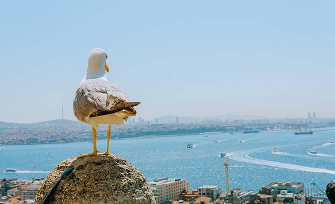 что посмотреть в Стамбуле за 7 дней